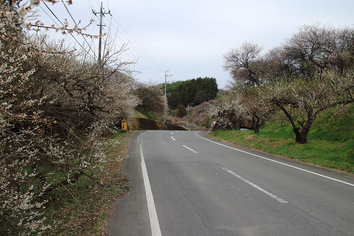 20130330_kusatsu1