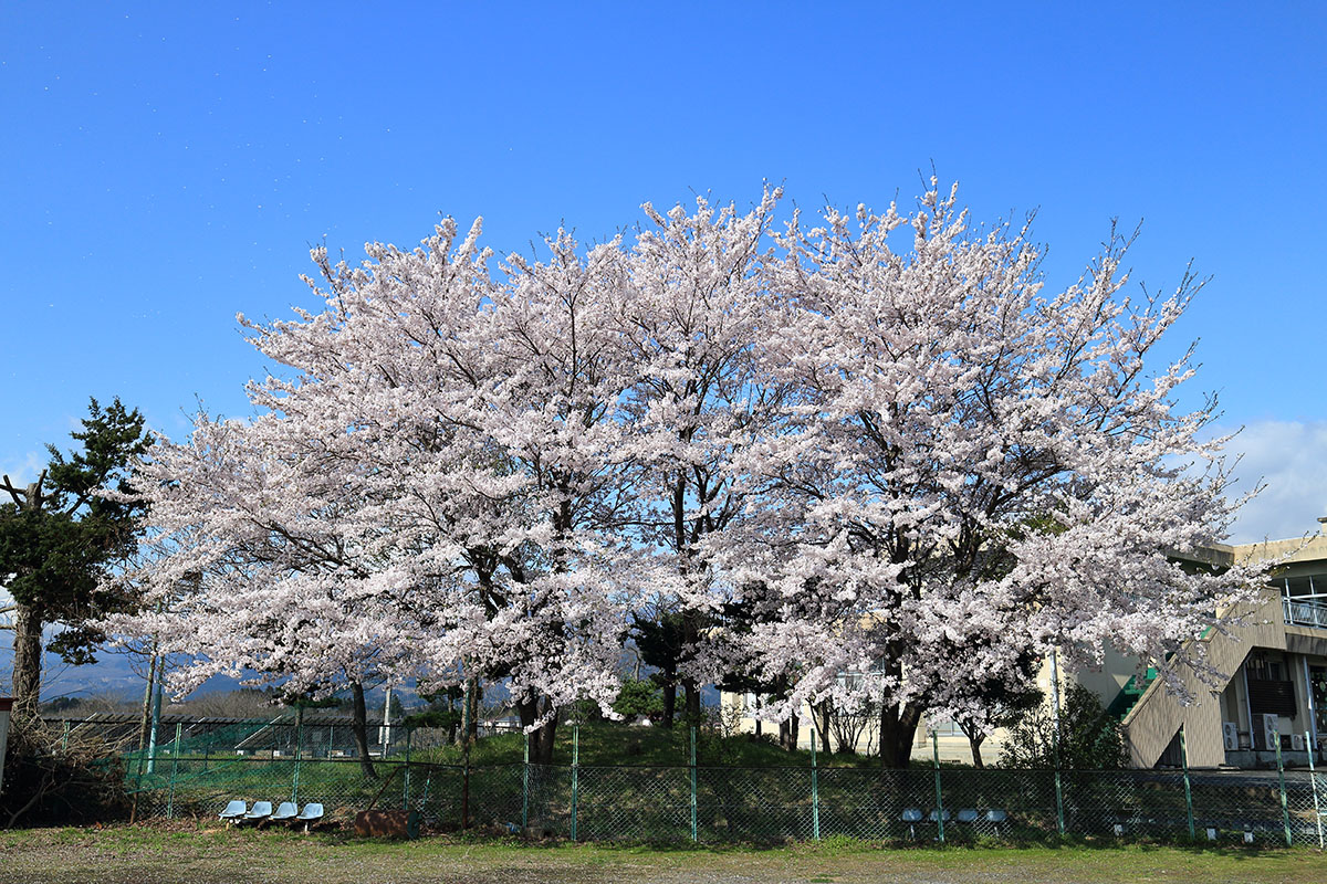 20140419_jyododaira1